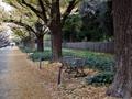 神宮外苑の秋
